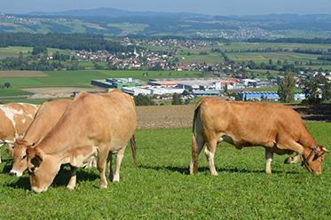 Industrie & Landwirtschaft